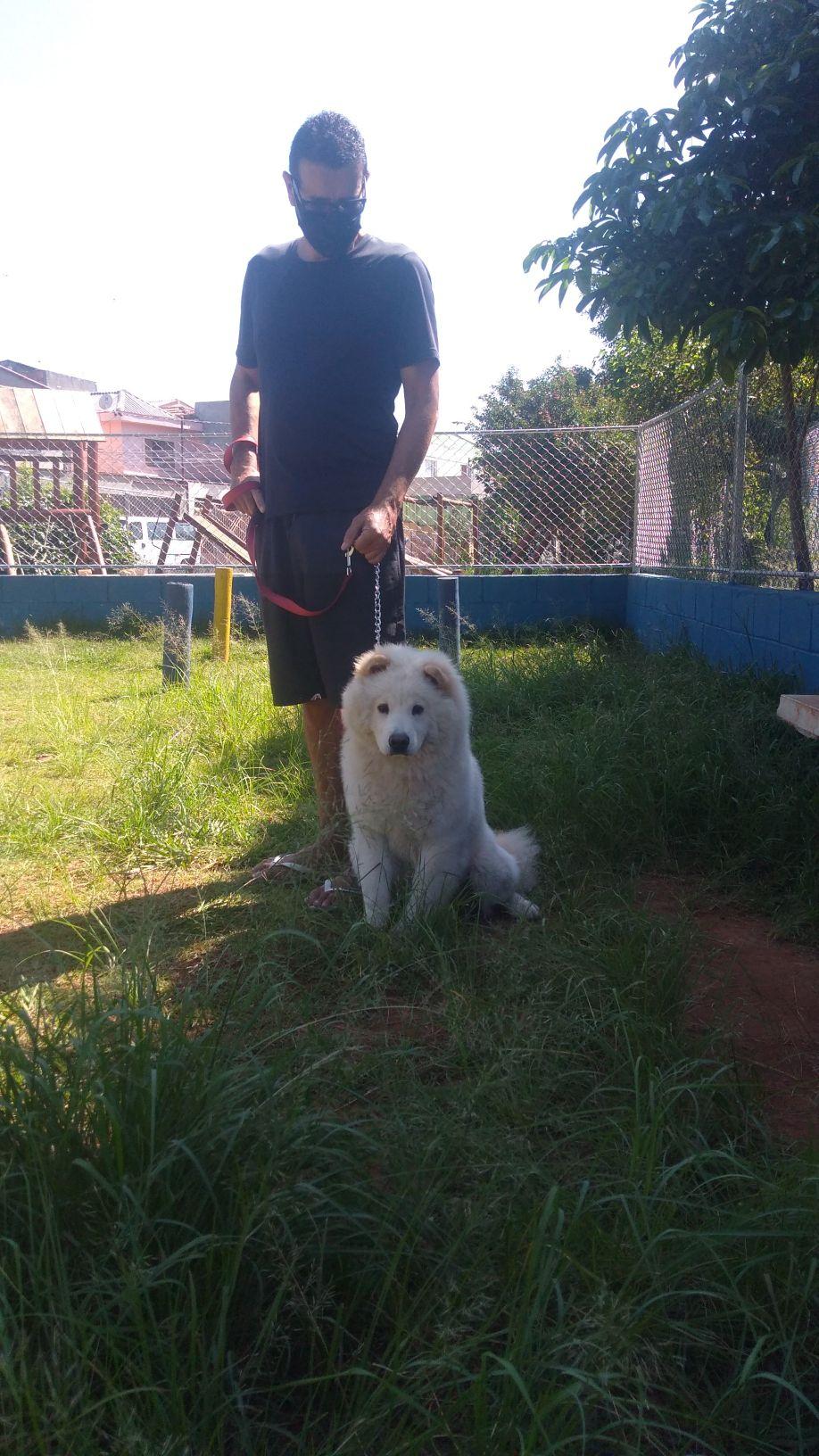 Luna e seu tutor, obediência e passeio