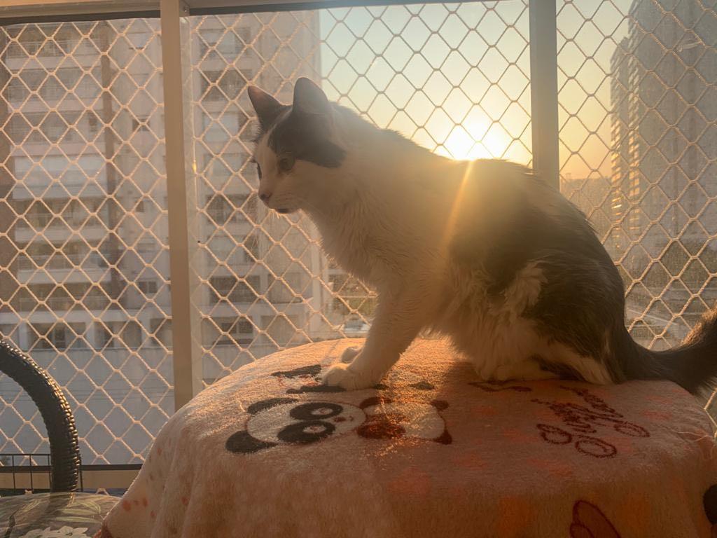 Tomando sol na varanda
