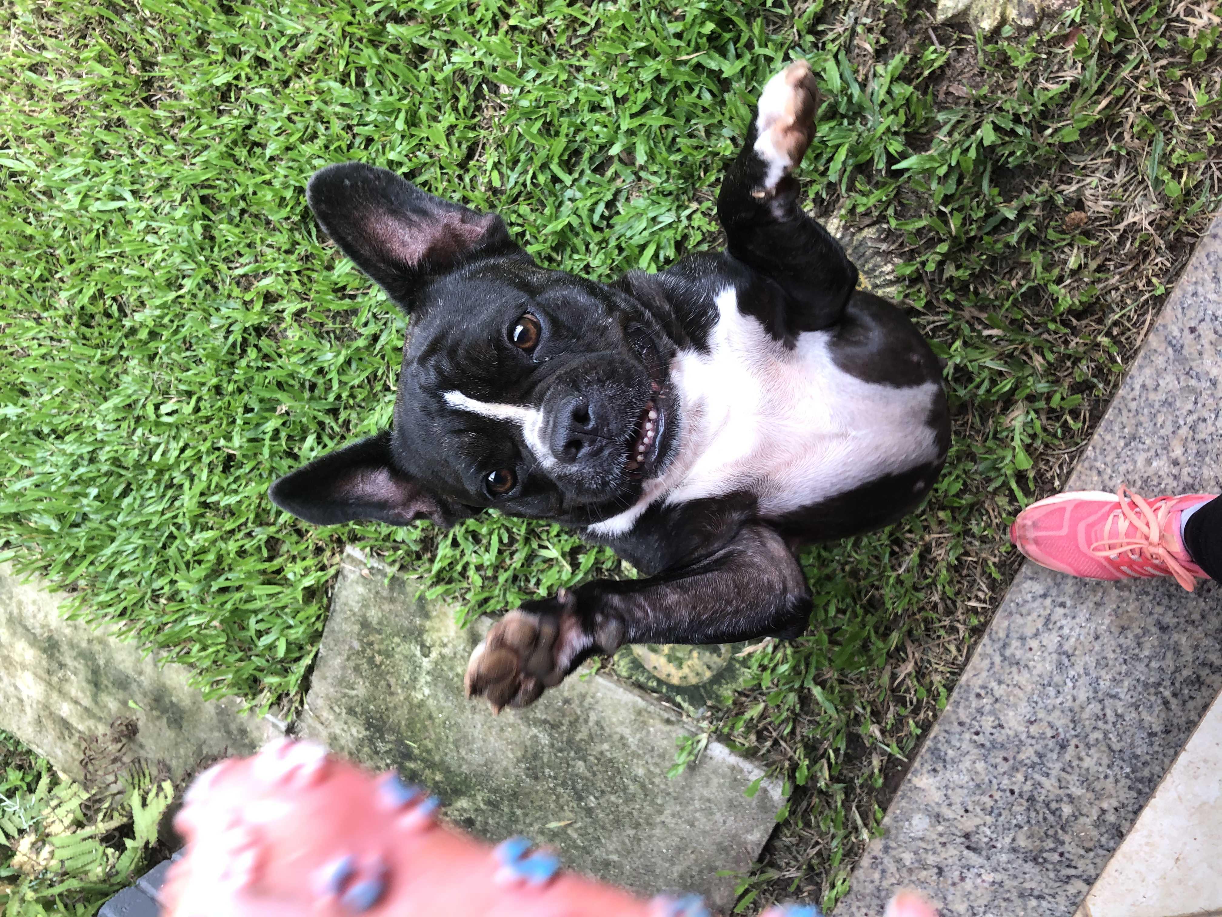 Rebeccah brincando no serviço de Pet Sitter