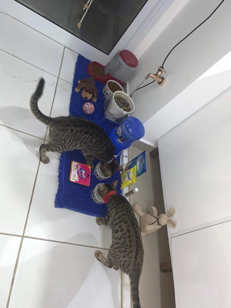 Comedouros e bebedouros |  coffee break dos gatos