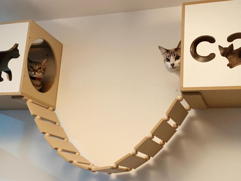 Hóspedes no Playground para gatinhos