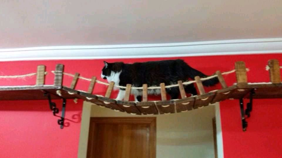 Para gatos aventureiros...