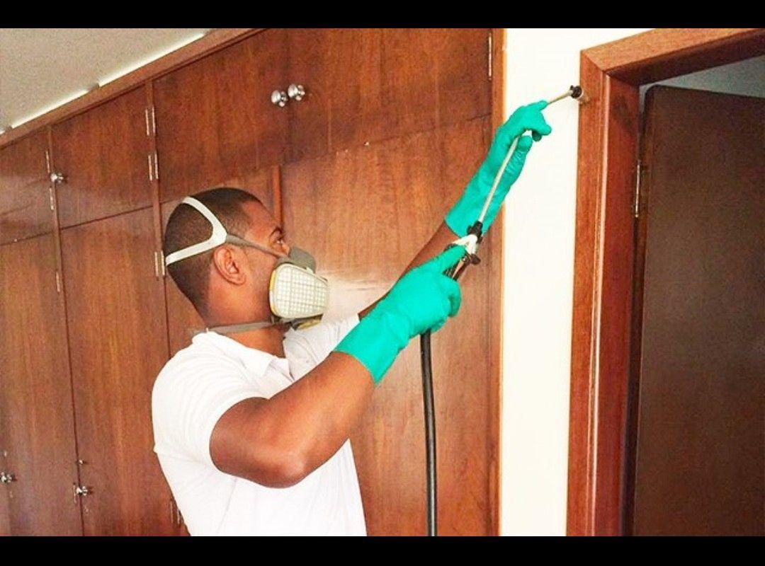 eliminação de cupim em móveis , piso e casas