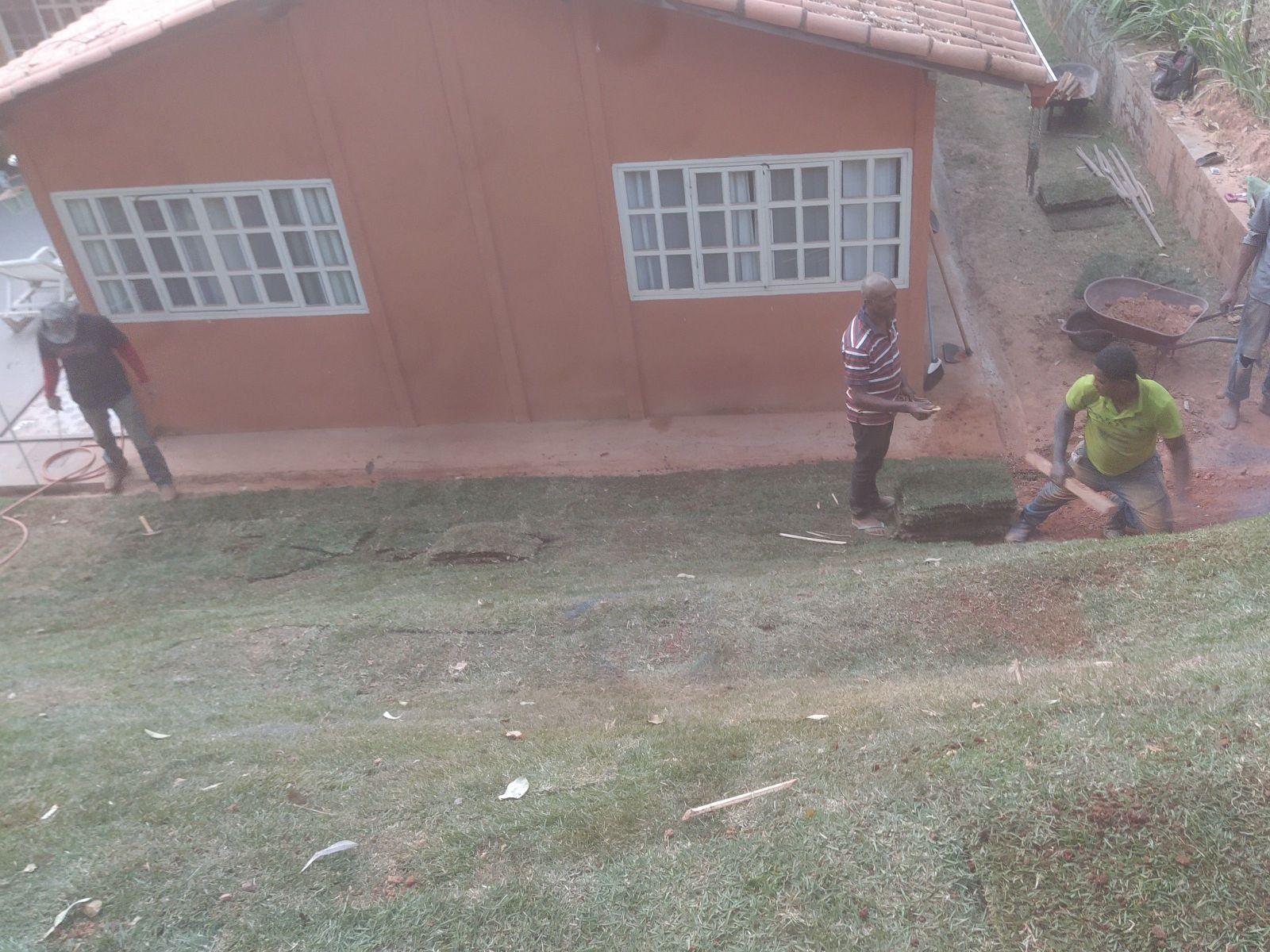 plantando grama no talude