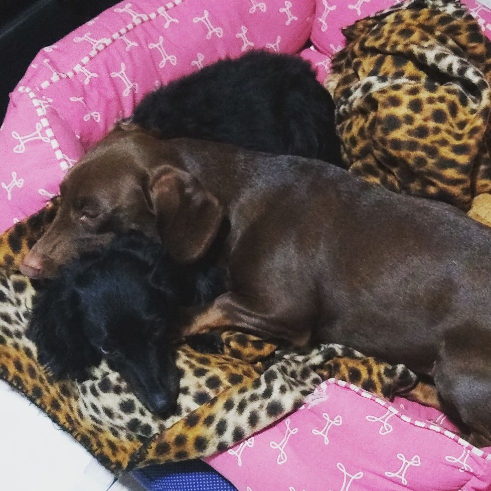 Zack & Ozzi cansados depois de brincar.