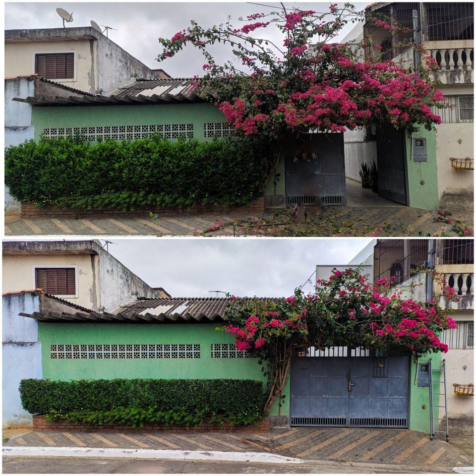 Antes e Depois de arbusto e árvore Primavera!