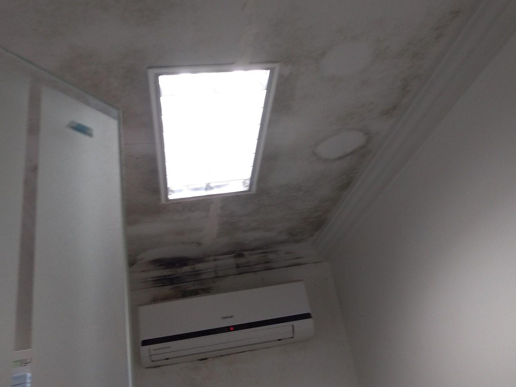 remoção de mofo no teto