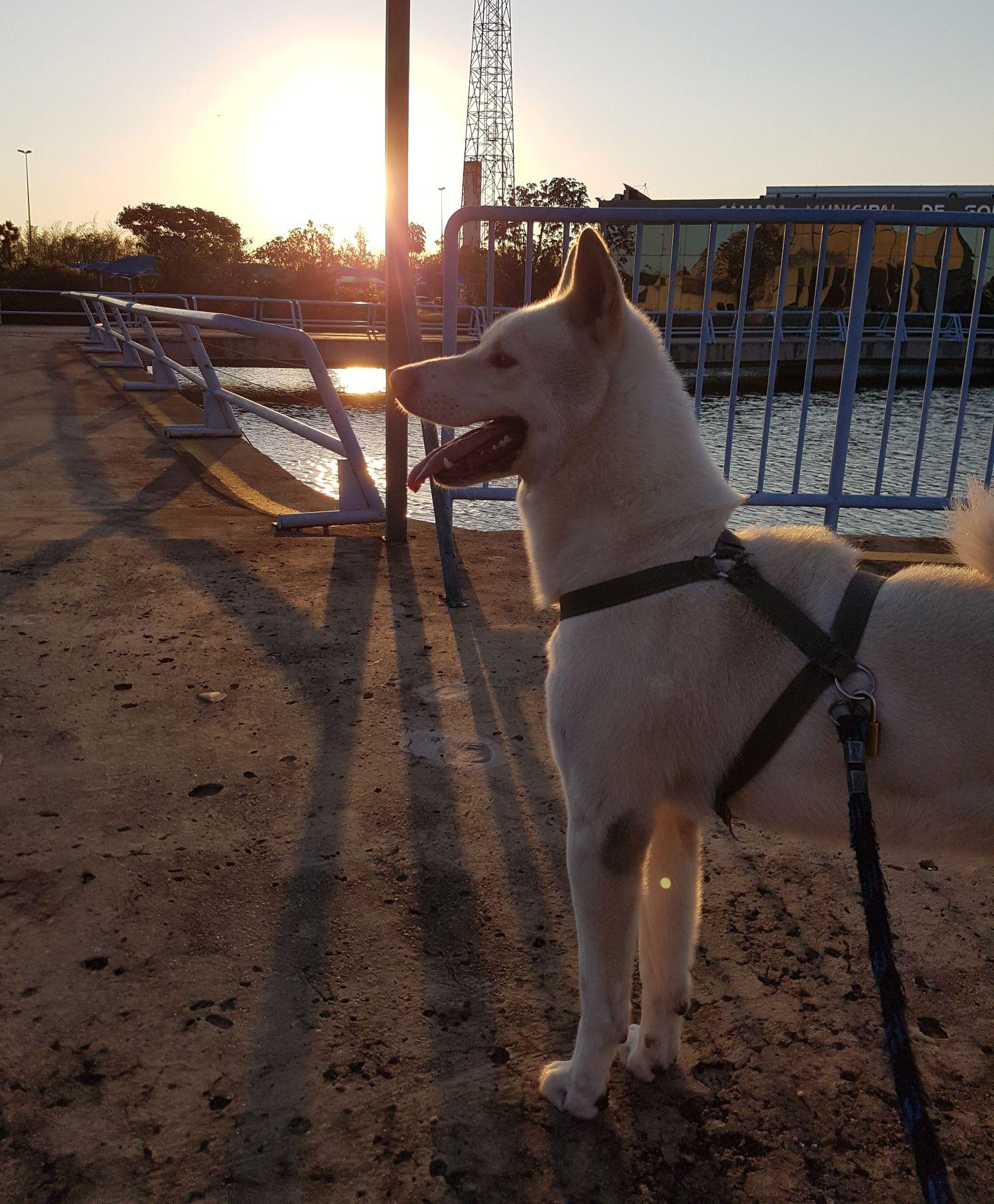 Passeio com cão de grande porte