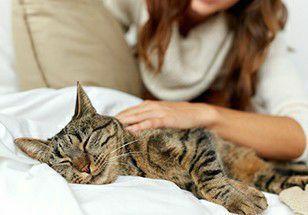 Zelo pelo bem estar do seu gatinho no dia-a- dia