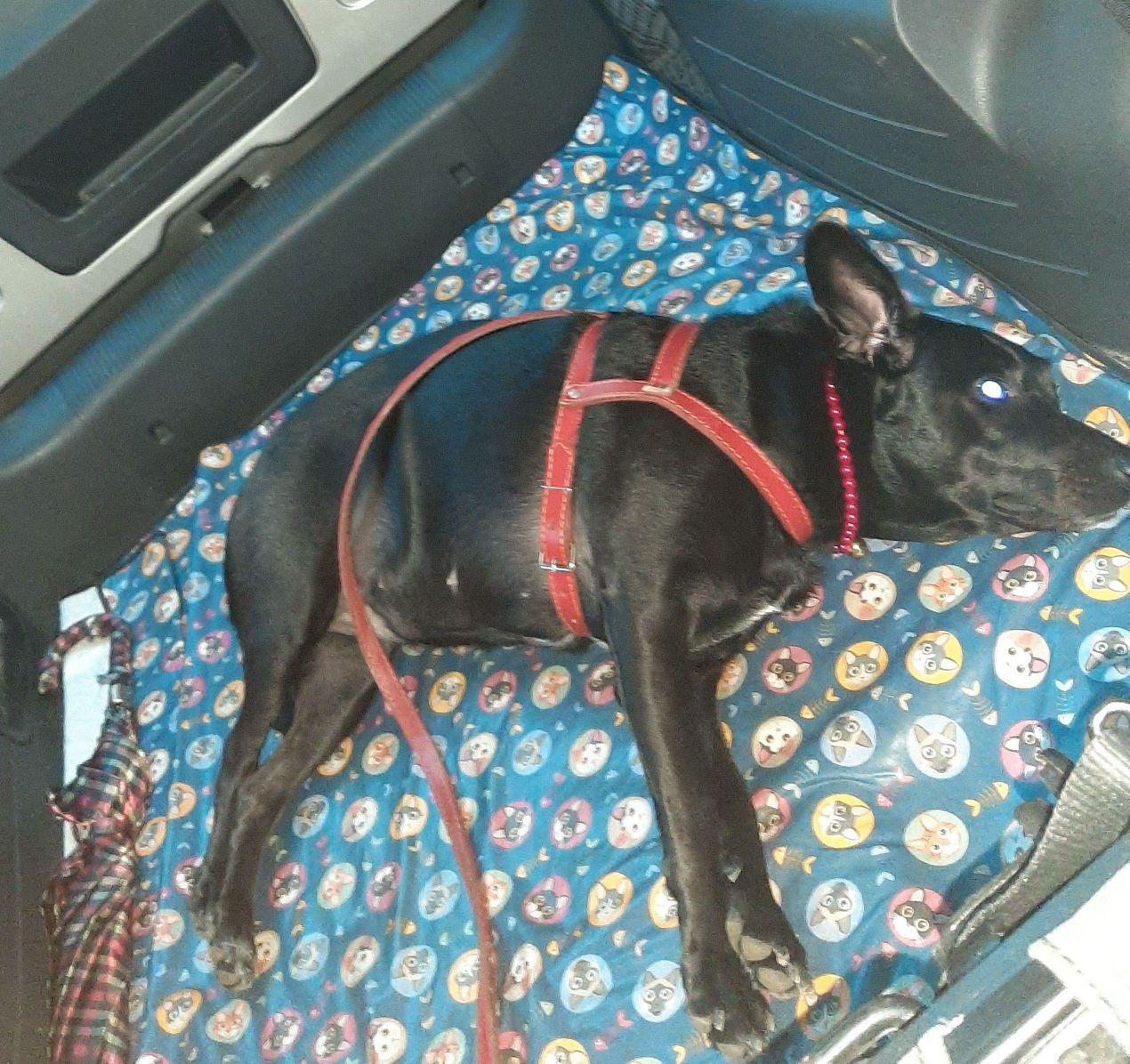 Relaxando no taxi