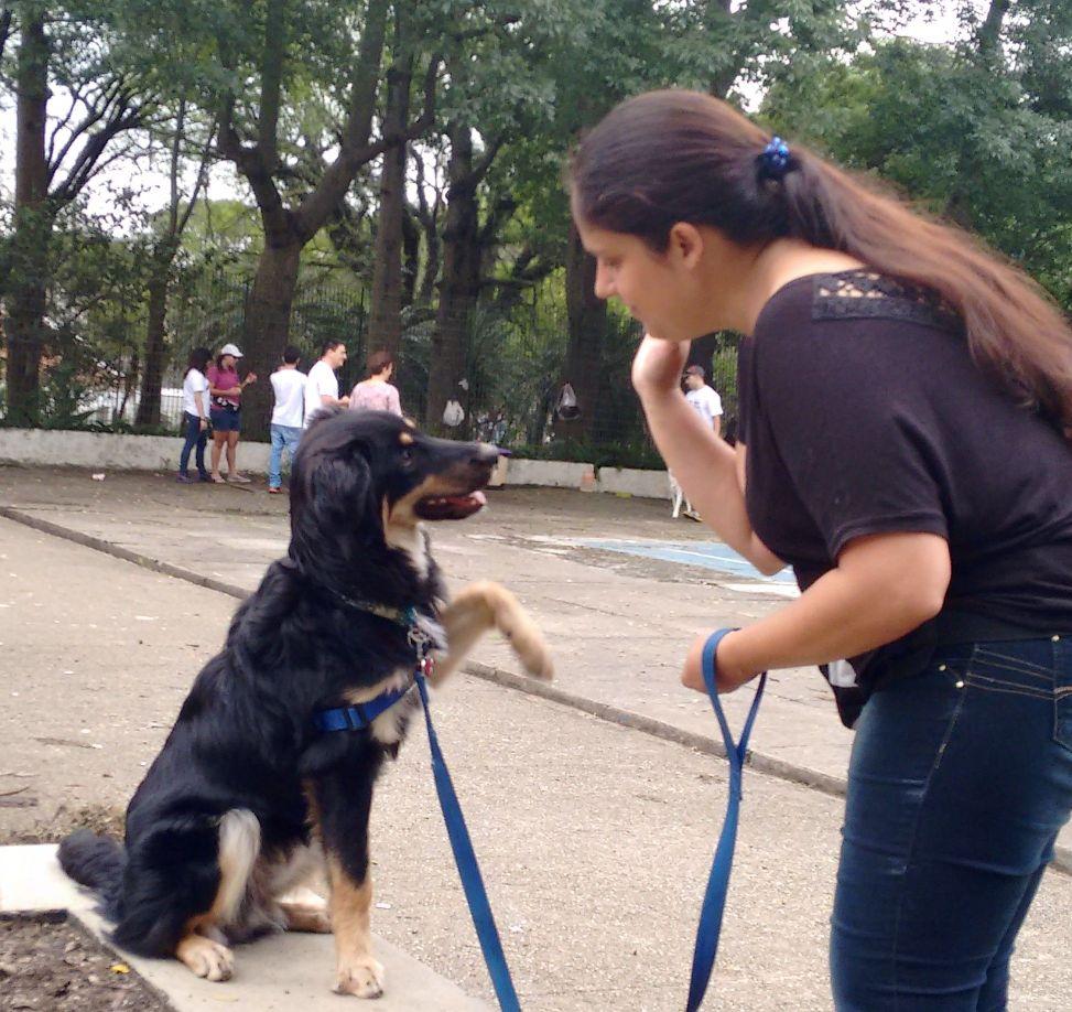 Adestramento