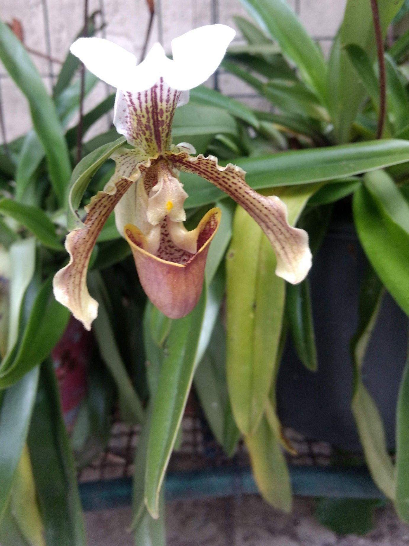 construção de orquidário e manejo de orquídeas
