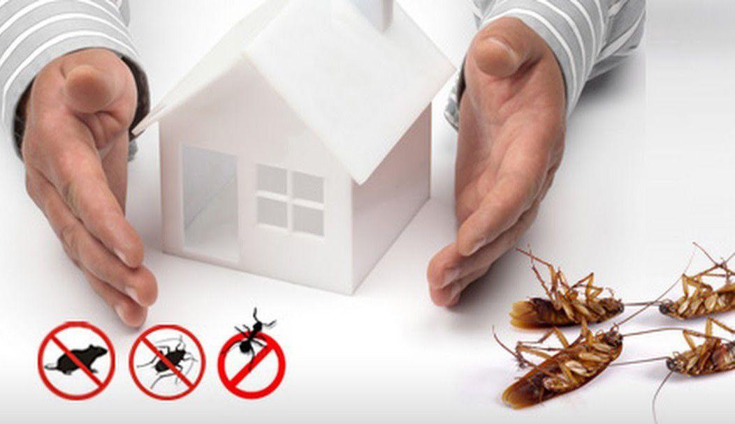 sua casa protegida de insetos