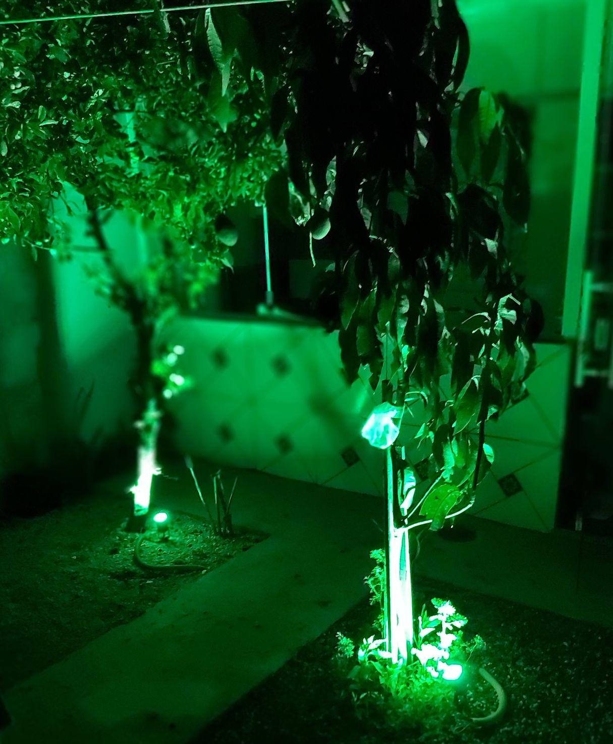 Jardim iluminando